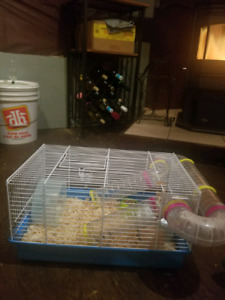 Brown and white long haired, female hamster