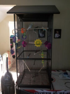 Large Bird cage and 4 budgies