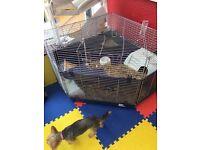 Corner indoor rabbit cage