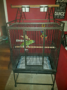 Amazon parrot and cage