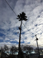 Gerrys Cheapest Tree Removal winter special save $$