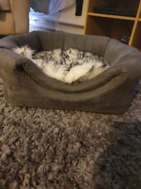 Cat bed/igloo