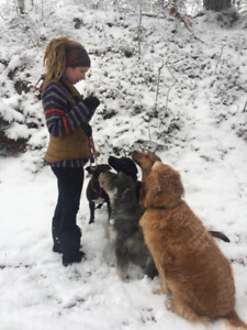 Professional Dog Walker - Group Wilderness Hikes, Private Walks