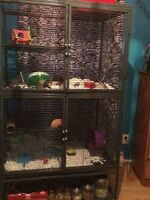 Guinea pig, hamster, bunny, rat cage