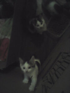 Two Beautiful Kittens Free To Good Homes