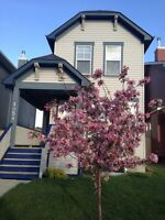 House to share/rent room Mckenzie Towne/New Brighton