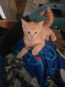 5 kittens free to good homes