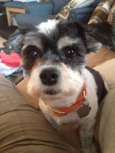 Lost in Welcome/Port Hope: small dog, short black/white hair
