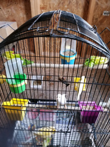 I am selling canaries female of 2017