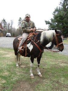 Registered Paint Mare For sale