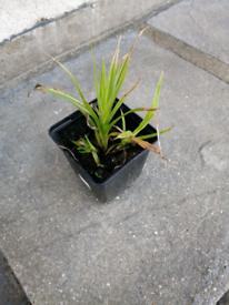 Free grass plant