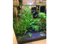 Aquarium, plants, shrimp