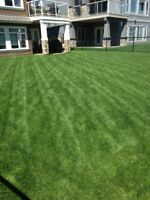 DR. GREEN LAWN CARE SERVICE - NO WEEDS! BEAUTIFUL LAWN!