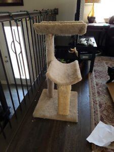 Cat tree well loved