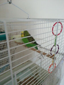 2 budgies with cage food or best offer