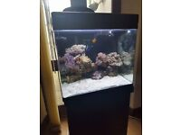 Marine fish tank (open to offers)