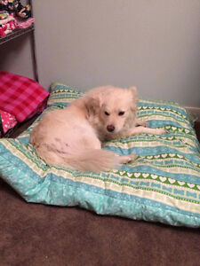 Dog and Cats Beds Strathcona County Edmonton Area image 5