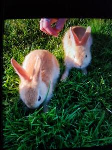 6 Cute little Bunnies