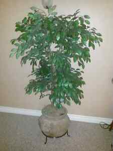 Artifical Plants - Ficus Trees