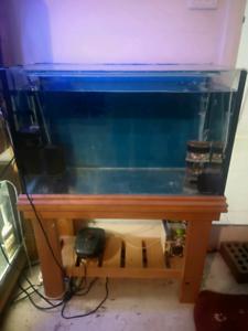 2.5 ft aquarium with stand