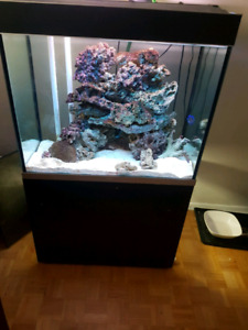 Saltwater  liverock lots available