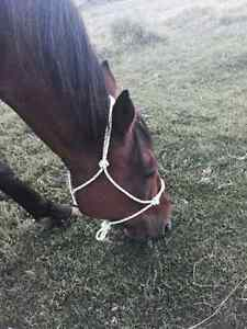 Rope Halters by Off The Charts Rope Halters Prince George British Columbia image 4
