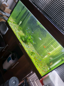 Tropical fish tank with all the fish