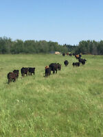 Full Time and Part Time Pasture Rider Wanted