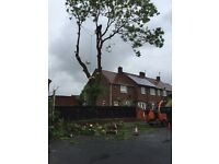 Tree surgeons/ landscapers / garden / jet wash / leaf clearance