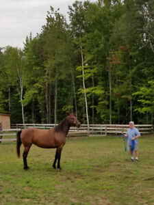 Standardbred partners ,shares ' available