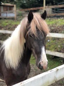 GORGEOUS HORSE FOR SALE