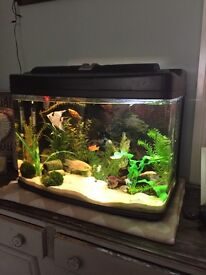 Curved Edge 2ft x 1ft FIsh Tank