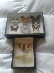 papillons collection
