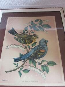 Cadre vintage  oiseaux  Litho in USA