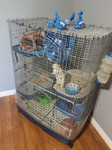 Four male rats with very large cage looking for new home.