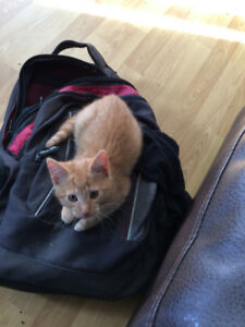 Kittens to give away