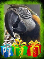 Fundraiser for Keeper of the Stars Parrot Rescue & Sanctuary Inc