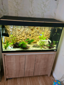 200L Fluval tropical fish tank with stand
