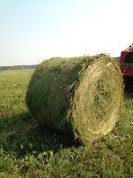 100 First Cut Alfalfa Bales- No Rain