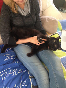 BLACK CAT LOST IN VANCOUVER BC