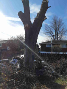 Free Silver Maple Wood