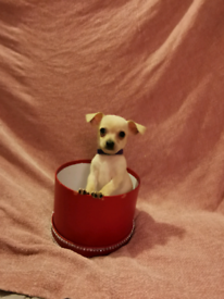 chihuahuas for sale... tiny champagne coloured very cute amd loving