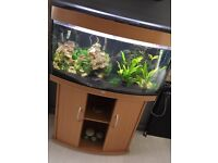 Jewel 260 Litre fish tank with lots of extras
