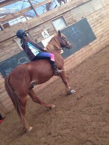 Horse to lease or buy