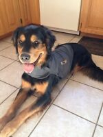 Medium Thunder Shirt for Dog