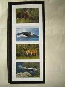 """7 Sets of Newfoundland Pictures $15 each or """"BUY 5 & GET 2 FREE"""