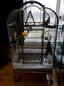 LOOKING FOR LARGE PARROT CAGE