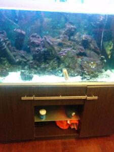 Aquarim fish tank with 3 fish and rocks