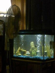 18 gal fish tank