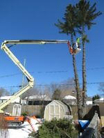 Tree Removal. Nobody Does It Like US!!. Master Tree Care 6263542